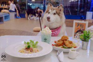 อาหารที่หมาไม่ควรกิน
